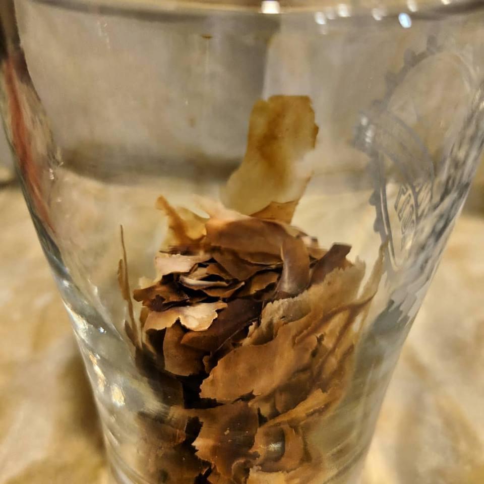 dried kveik